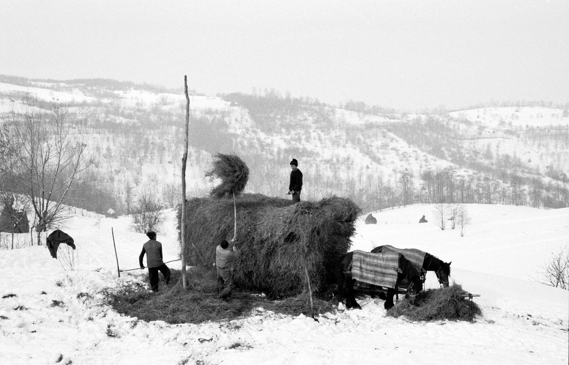 014_Master_Winter_Haymaking_xpan-001
