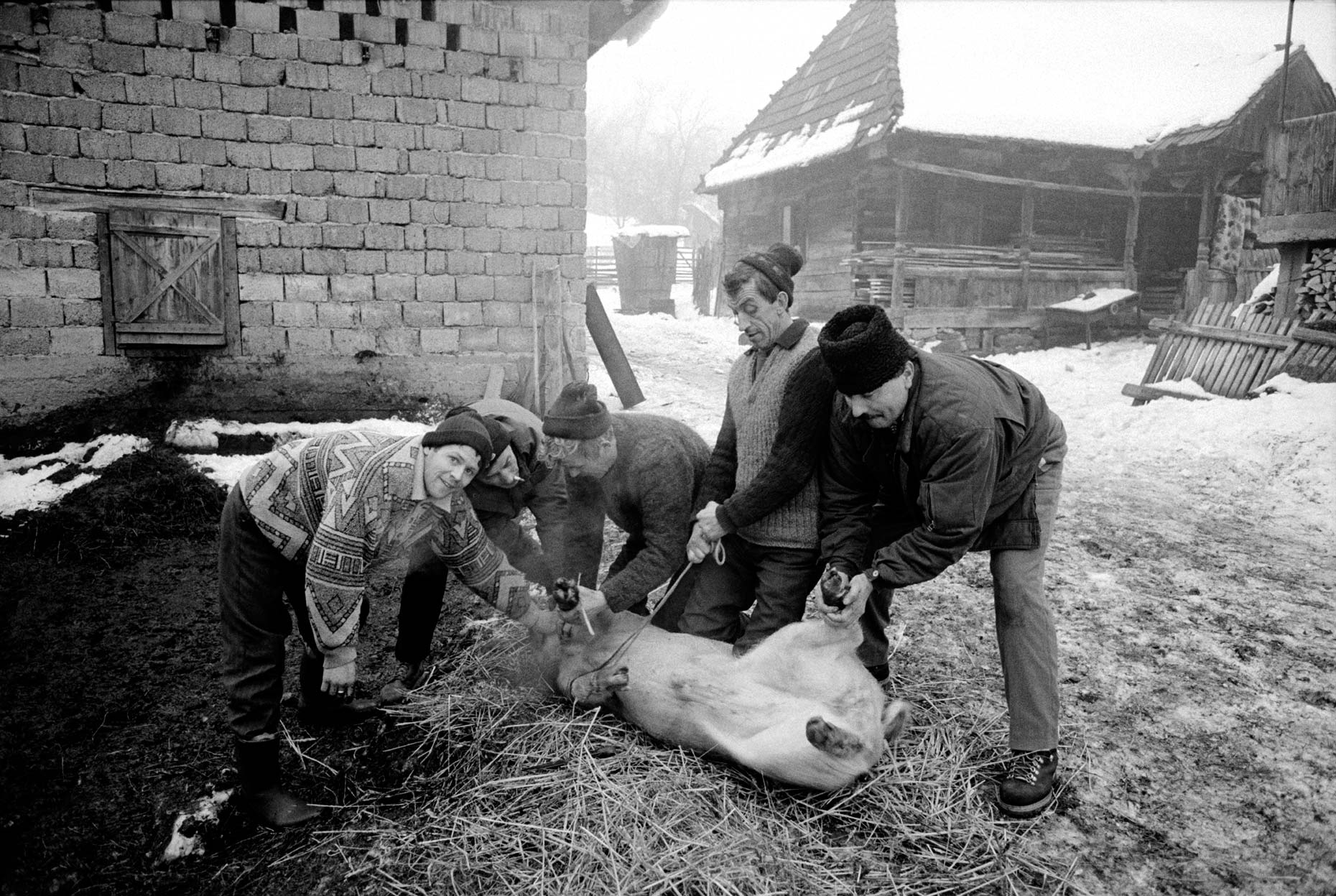 020_Ellicson_2003_Pig_slaughter_group