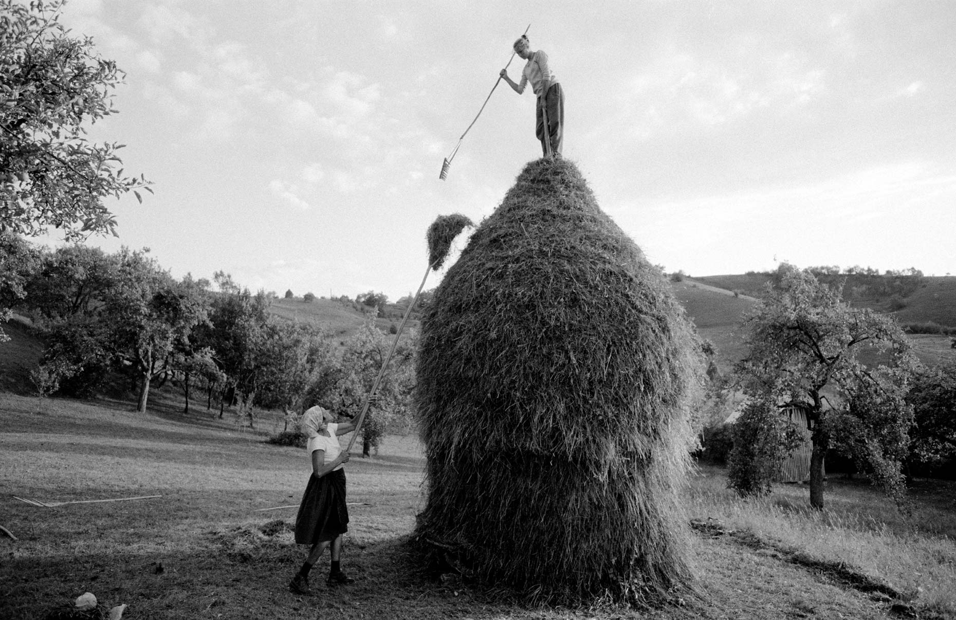 023_Summer_Haymaking